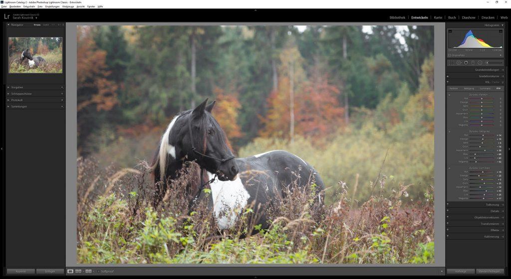 Workflow Pferdefotografie | Tinkerstute Rosy | Sarah Koutnik Fotografie | München Krailling Bayern | HSL