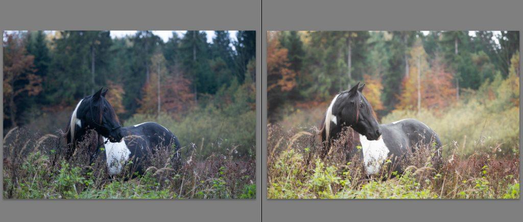Workflow Pferdefotografie | Tinkerstute Rosy | Sarah Koutnik Fotografie | München Krailling Bayern | Vergleich Rohdatei Photoshop