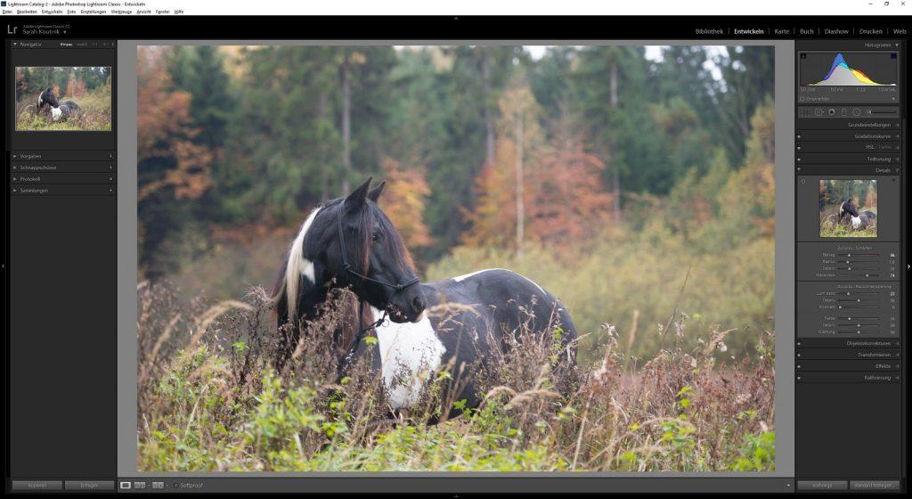 Workflow Pferdefotografie | Tinkerstute Rosy | Sarah Koutnik Fotografie | München Krailling Bayern | Schärfen