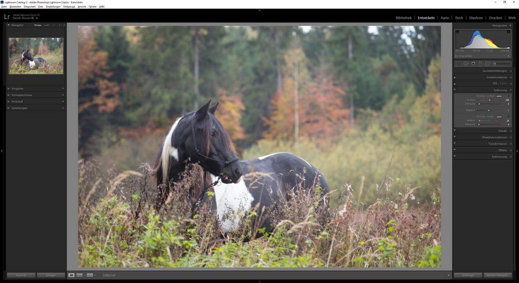 Workflow Pferdefotografie | Tinkerstute Rosy | Sarah Koutnik Fotografie | München Krailling Bayern | Teiltonung