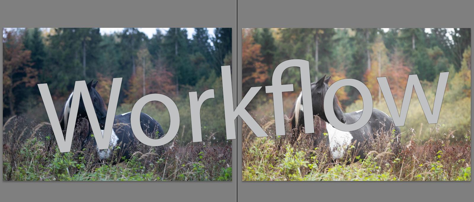 Workflow Pferdefotografie | Tinkerstute Rosy | Sarah Koutnik Fotografie | München Krailling Bayern | Titelbild Workflow