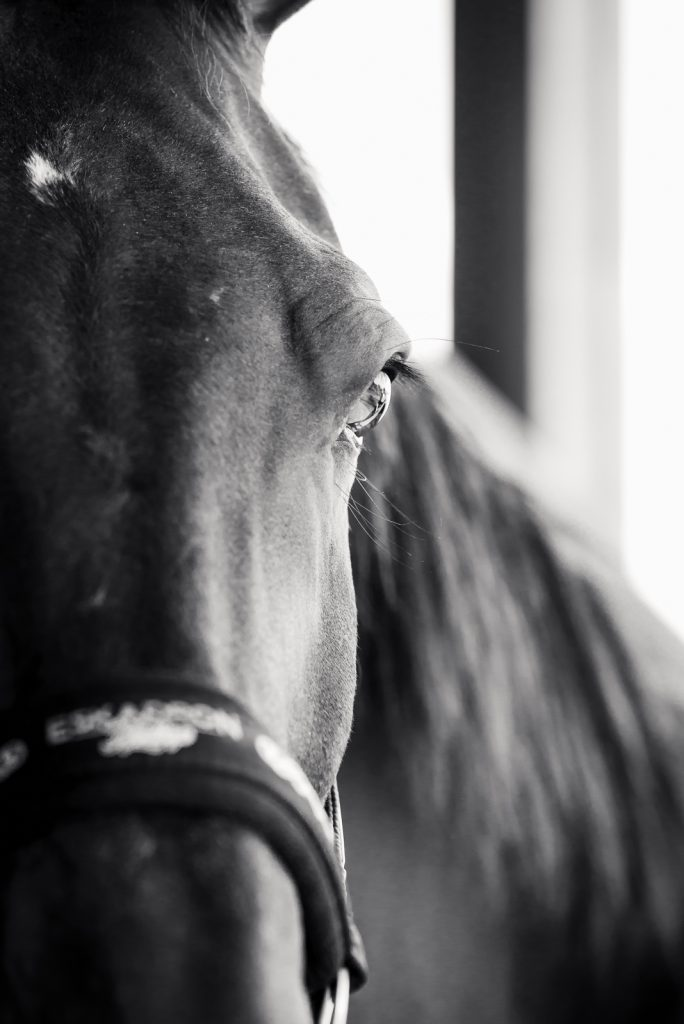Schwarz weiß Foto | Paulchen | dokumentarische Pferdefotografie | Sarah Koutnik Fotografie